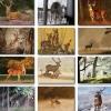 โปสการ์ดภาพกวาง 32ใบ/เซ็ท ภาพไม่ซ้ำกัน The Lovely Deer Postcard Set #2
