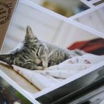 โปสการ์ดแมว/ลูกแมว 28 ใบ/เซ็ท ลายไม่ซ้ำกัน Cats/Kittens Postcard Set (มีตำหนิเล็กน้อยจากการขนส่ง)