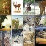 โปสการ์ดภาพกวาง 32ใบ/เซ็ท ภาพไม่ซ้ำกัน The Lovely Deer Postcard Set #1