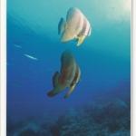 โปสการ์ด โลกใต้ทะเล ใต้ท้องทะเลไทย /ดำน้ำ/สัตว์ต่างๆ