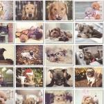 โปสการ์ดภาพสุนัข 32ใบ/เซ็ท Dog Postcard