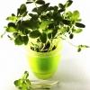 กระถางปลูกผักกลม สีเขียว (Hydropots)