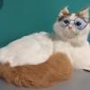 แว่นตาสำหรับสัตว์เลี้ยง