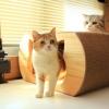 บ้านแมวหน้าแมว