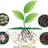 VDO เปิดปม : ชักธงรบสารเคมีเกษตร Thai PBS