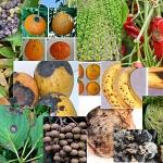 VDO 5 อันดับผักที่มีสารพิษตกค้างมากที่สุด