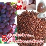 5 ประโยชน์จากสารสกัดจากเมล็ดองุ่น