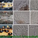 วิธีการใช้เชื้อราบิวเวอร์เรียกำจัดแมลงศัตรูพืชให้ได้ผลและถูกต้อง