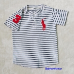 Polo : เสื้อยืดลายขวาง สีขาว คอติดกระดุม แขนปักเลข 3 size : 2T / 4T / 6T / 8T