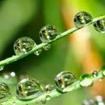 VDO สารเคมีเกษตรทำลายเซลสมองทารก Thai PBS News