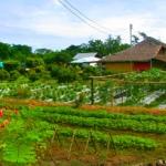 เกษตรปลอดภัย VS เกษตรอินทรย์