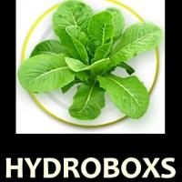 ร้านHydroBoxs เปลี่ยนเรื่องปลูกผัก เป็นเรื่่องง่ายสำหรับคุณ