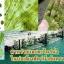 สารกำจัดสาหร่าย ตะไคร่น้ำ thumbnail 5