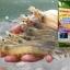 จุลินทรีย์ย่อยสลายของเสียในบ่อเลี้ยงสัตว์น้ำ thumbnail 3