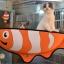 เปลแมวติดกระจก ปลานีโม thumbnail 6