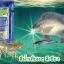 สารปรับสภาพน้ำ สีน้ำเทียมเลี้ยงสัตว์น้ำ สีเขียว thumbnail 2