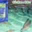 สารปรับสภาพน้ำ สีน้ำเทียมเลี้ยงสัตว์น้ำ สีเขียว thumbnail 9