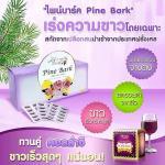 Pine Bark Extract Plus