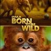 IMAX: Born To Be Wild - มหัศจรรย์ชีวิตป่า