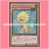 GDB1-JP002 : Dandylion (Gold Rare)