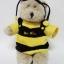 ตุ๊กตาหมี STARBUCKS JUMBO BUBBLE BEE BEARISTA BEAR(ใส่ชุดผึ้ง) thumbnail 1