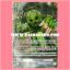 T-PR/007TH : หน้ากากทุเรียน (Durian Mask) - แบบโฮโลแกรมฟอยล์ ฟูลอาร์ท ไร้กรอบ (Full Art) thumbnail 1