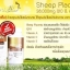 Angel 's Secret Sheep Placenta 38,000mg CoQ10&ACE Plus 100 Capsules thumbnail 3