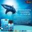 Auswelllife Pure Squalene Tasmanian 1,000mg ออสเวลไลฟ์ เพียว สควอลีน น้ำมันตับปลาฉลาม บรรจุ 60เม็ด thumbnail 4