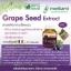 Morikami Laboratories Grape Seed Extract โมริคามิ ลาบอราทอรีส์ สารสกัดจากเมล็ดองุ่น thumbnail 2