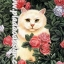 กระดาษสาพิมพ์ลาย สำหรับทำงาน เดคูพาจ Decoupage แนวภาพ แมวสีนวลนั่งอยู่ในดงกุหลาบชมพูไม่มีหนาม thumbnail 1