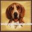 กระดาษสาพิมพ์ลาย สำหรับทำงาน เดคูพาจ Decoupage แนวภาพ สุนัข น้องหมา สีโทนน้ำตาลขาว บนพื้นครีม thumbnail 1