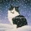 กระดาษสาพิมพ์ลาย สำหรับทำงาน เดคูพาจ Decoupage แนวภาพ แมวขาวดำ ตากลม นั่งแอ๊คท่าเท่ห์ ท่ามกลางหิมะตก thumbnail 1