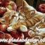 กระดาษสาพิมพ์ลาย สำหรับทำงาน เดคูพาจ Decoupage แนวภาำพ ลูกแมวขนฟูสีน้ำตาล 3 ตัว นอนกอดกันหลับไหลในถังใส่แอปเปิ้ล thumbnail 1