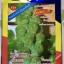 เมล็ดพันธุ์กะหล่ำดาว Brussels Sprouts (ประมาณ100เมล็ด) thumbnail 1